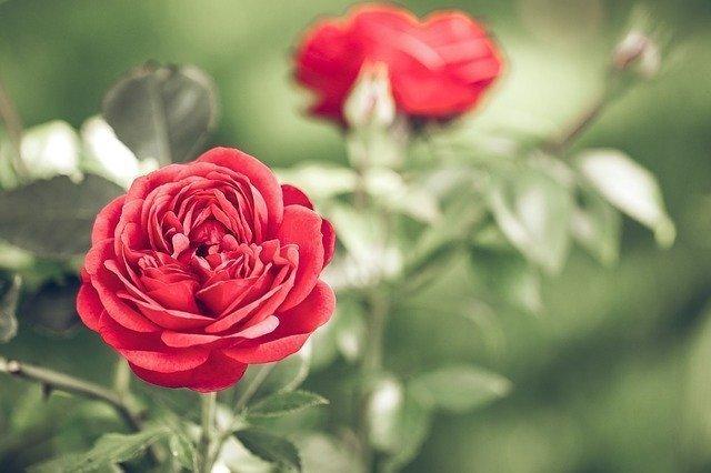 El regalo perfecto por San Valentín